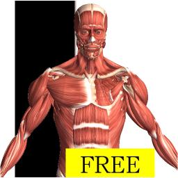 best anatomy app