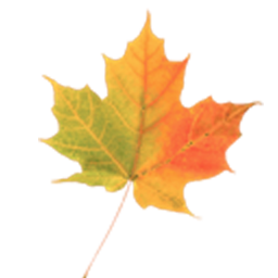 Image result for autumn leaf