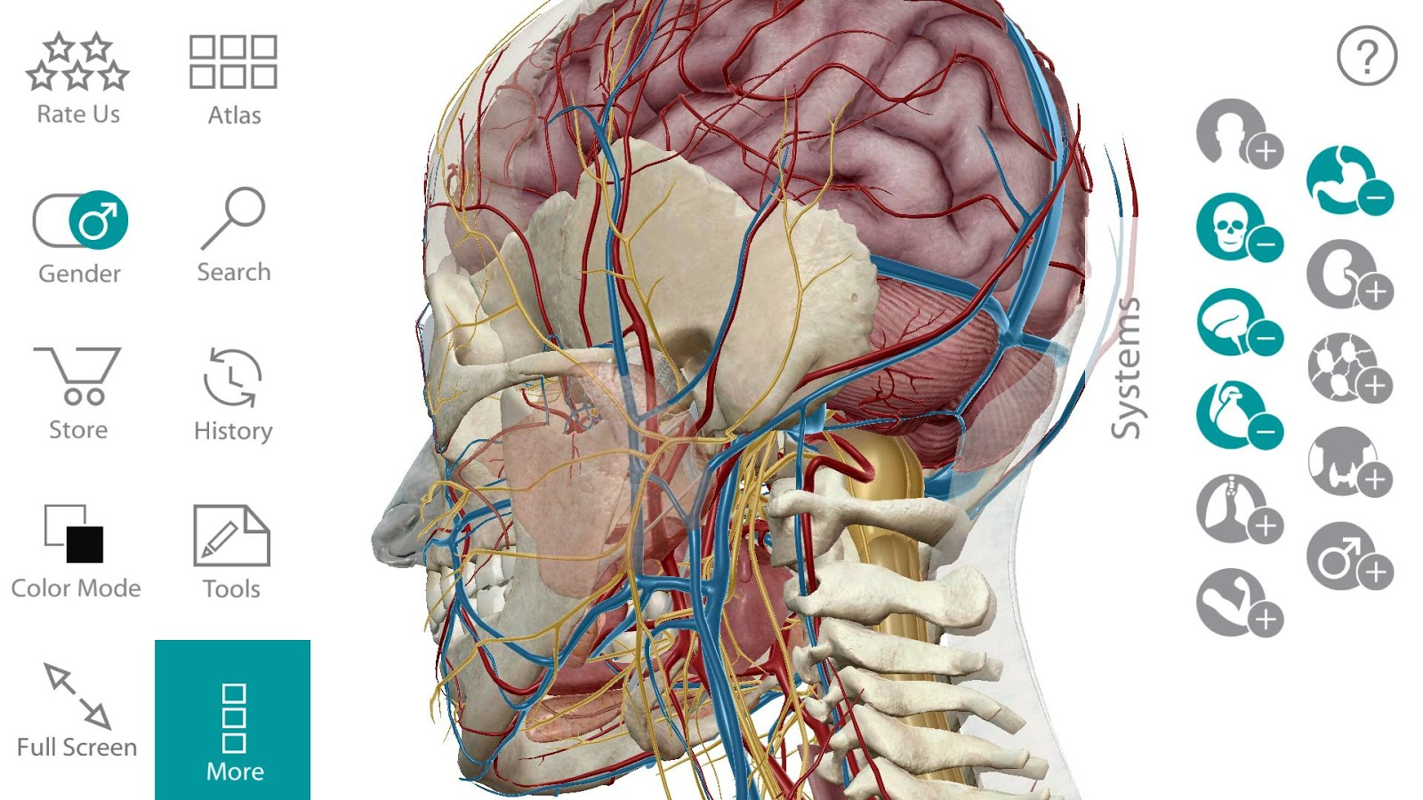 Anatomy Learning 3d Atlas Image collections - human body anatomy