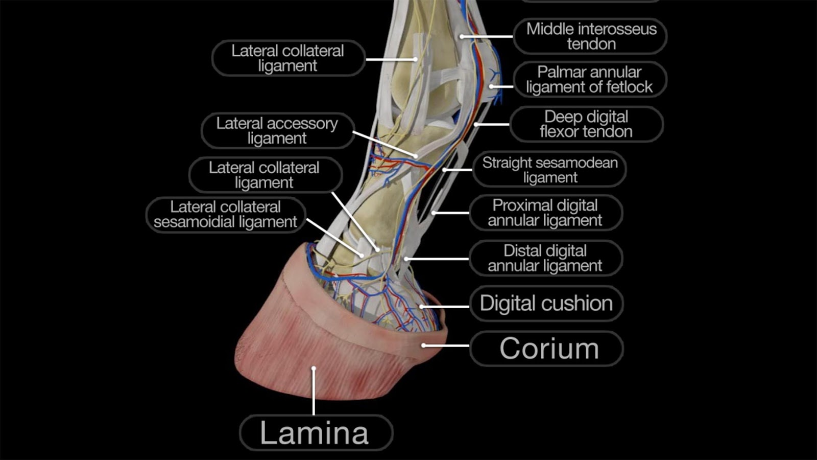 Horse Anatomy: Equine 3D App Ranking and Store Data | App Annie