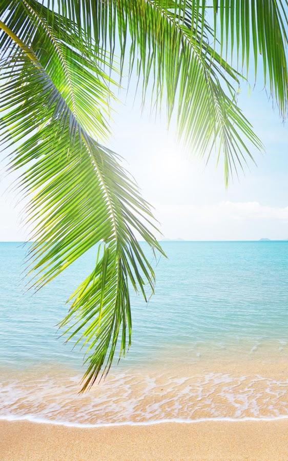 Tropical beach live wallpaper app ranking and store data app annie - Playa wallpaper ...