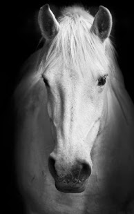 Wait No More Download Horses Live Wallpaper And Enjoy White Horse Wallpapers Or Black On Your Screen