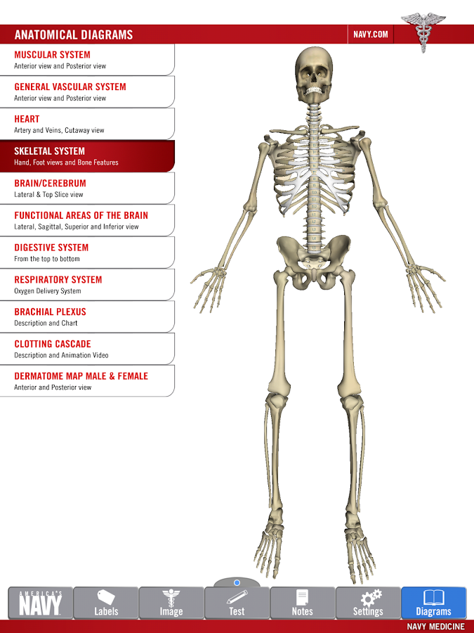 Anatomy Study Guide App Ranking and Store Data | App Annie