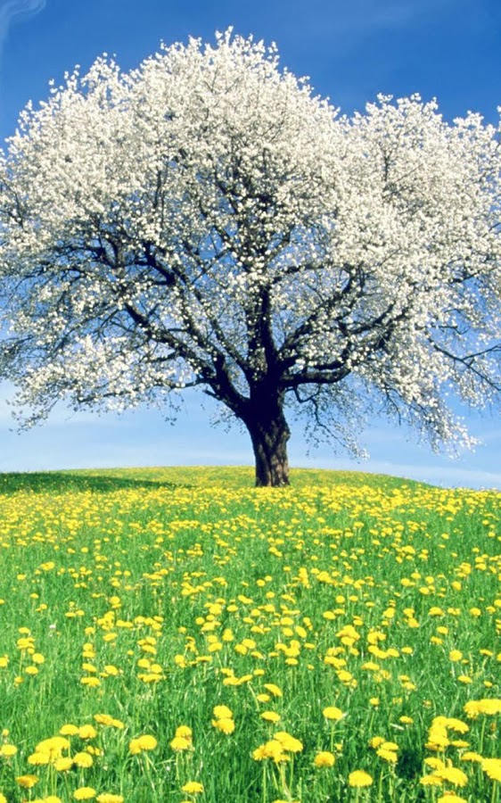 Nature live wallpapers app ranking and store data app annie - Nature wallpaper collection zip ...