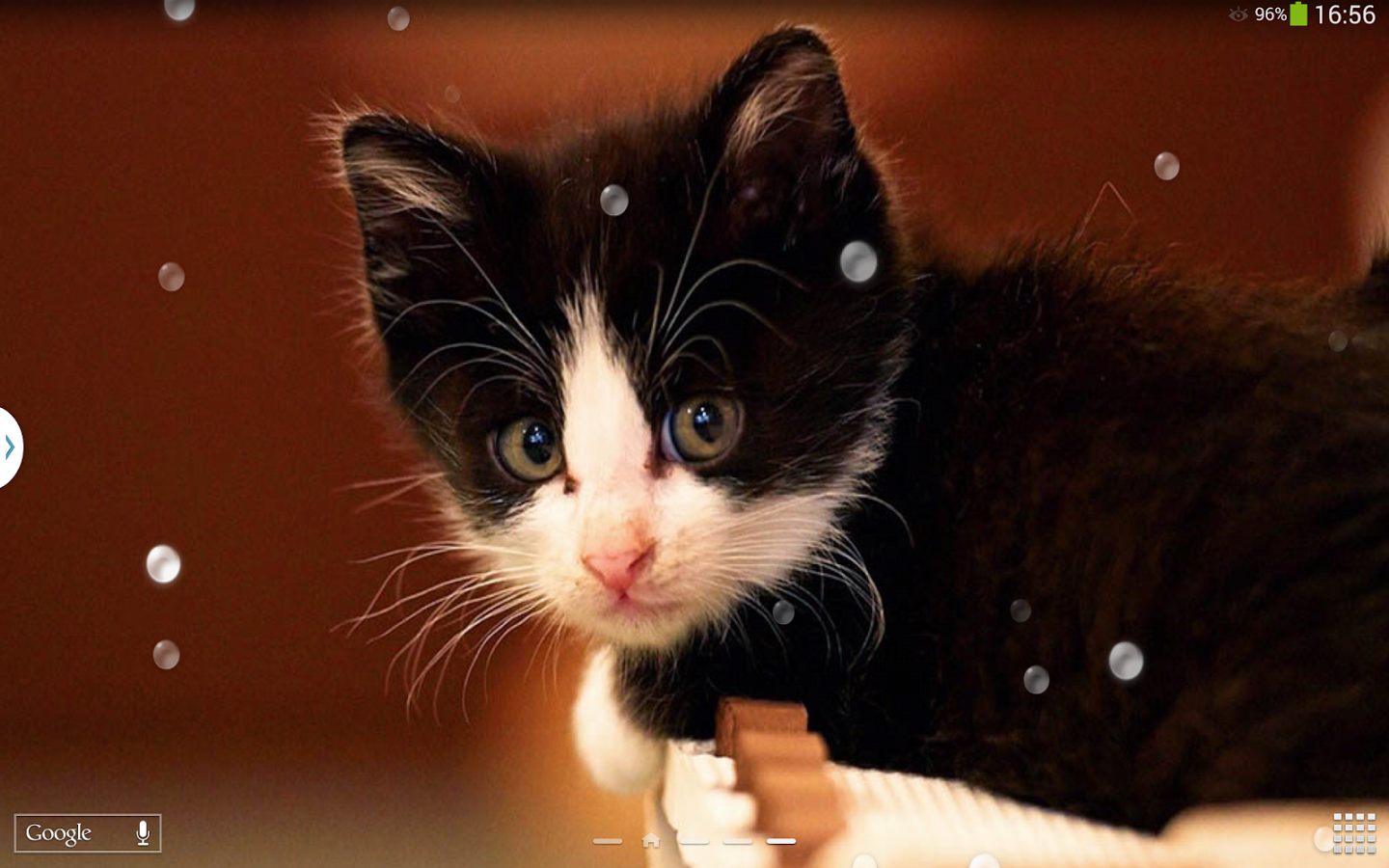Cute Cats Live Wallpaper App Ranking And Store Data App Annie