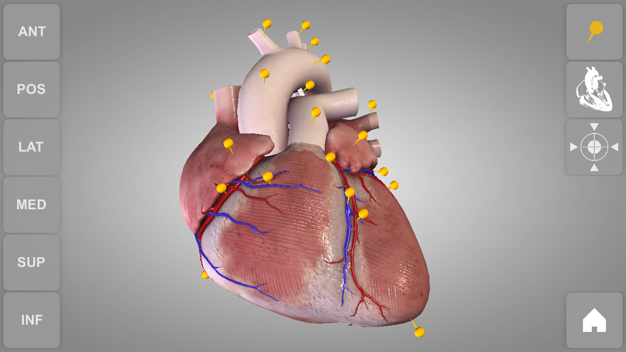 Heart 3D Anatomy App Ranking and Store Data | App Annie