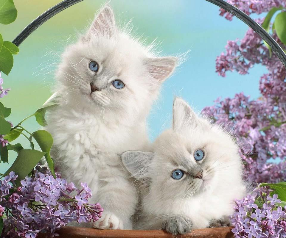 Cute Cat Live Wallpaper App Ranking And Store Data