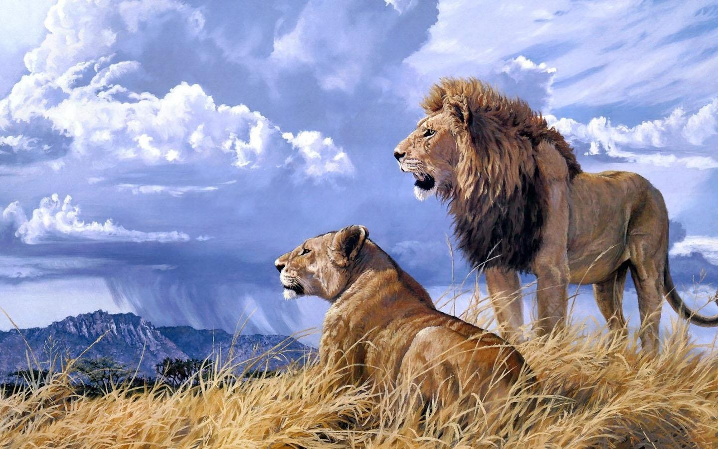 Hd wallpaper download app - If You Are A Lion Lovers Do Not Miss This Lion Hd Wallpaper Internet Network Permission For Google Advertising App Description