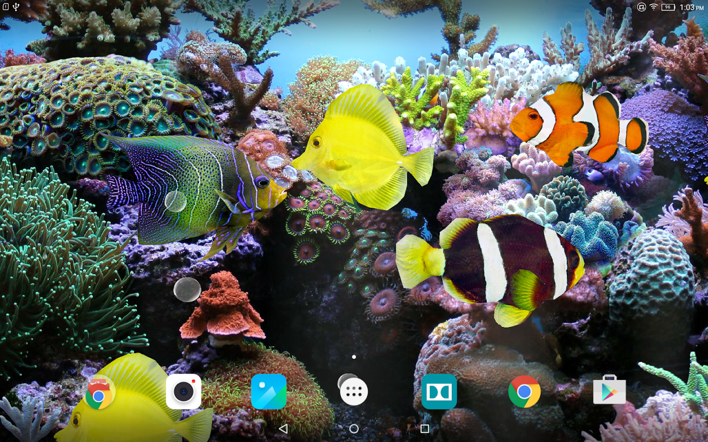 Coral Fish 3D Live Wallpaper App Ranking And Store Data