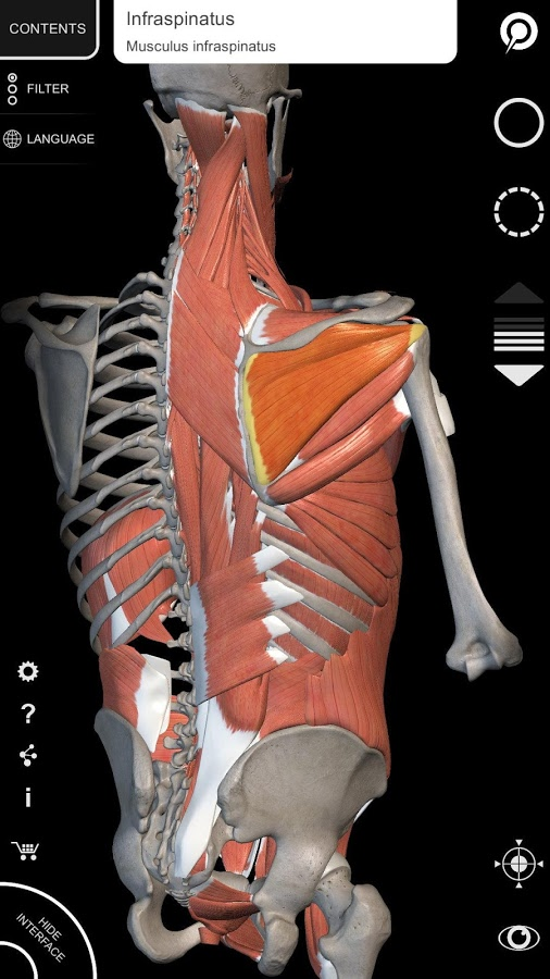 Muscle | Skeleton - 3D Atlas of Anatomy App Ranking and Store Data ...