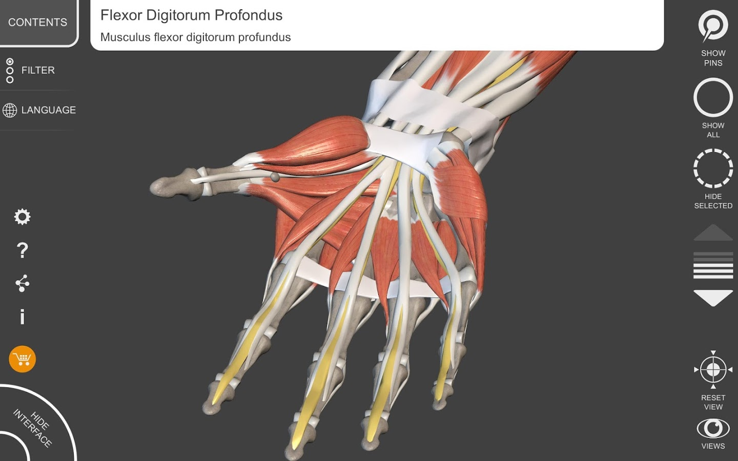 Muscle Skeleton 3d Atlas Of Anatomy App Ranking And Store Data