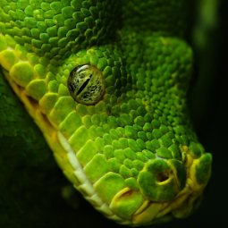 Snake Live Wallpaper App Ranking and