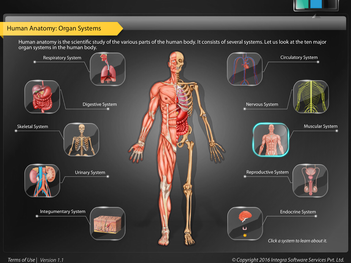 HumanAnatomy-MuscularSystem App Ranking and Store Data | App Annie