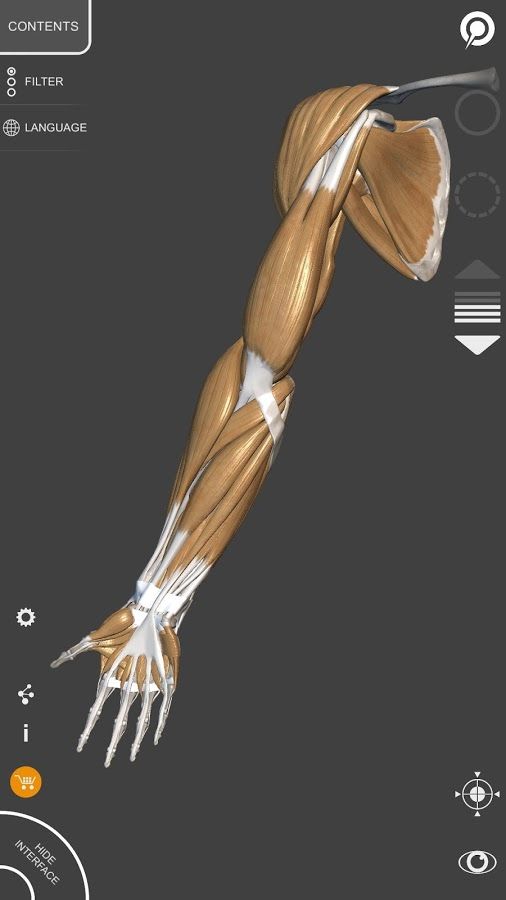 3D Anatomy for the Artist App Ranking and Store Data | App Annie