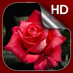3d Rose Live Wallpaper Hd App Ranking And Store Data