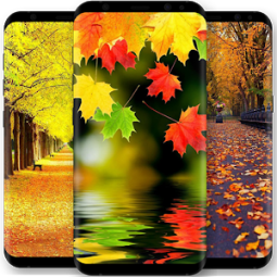 Autumn Wallpaper App Ranking And Store Data App Annie