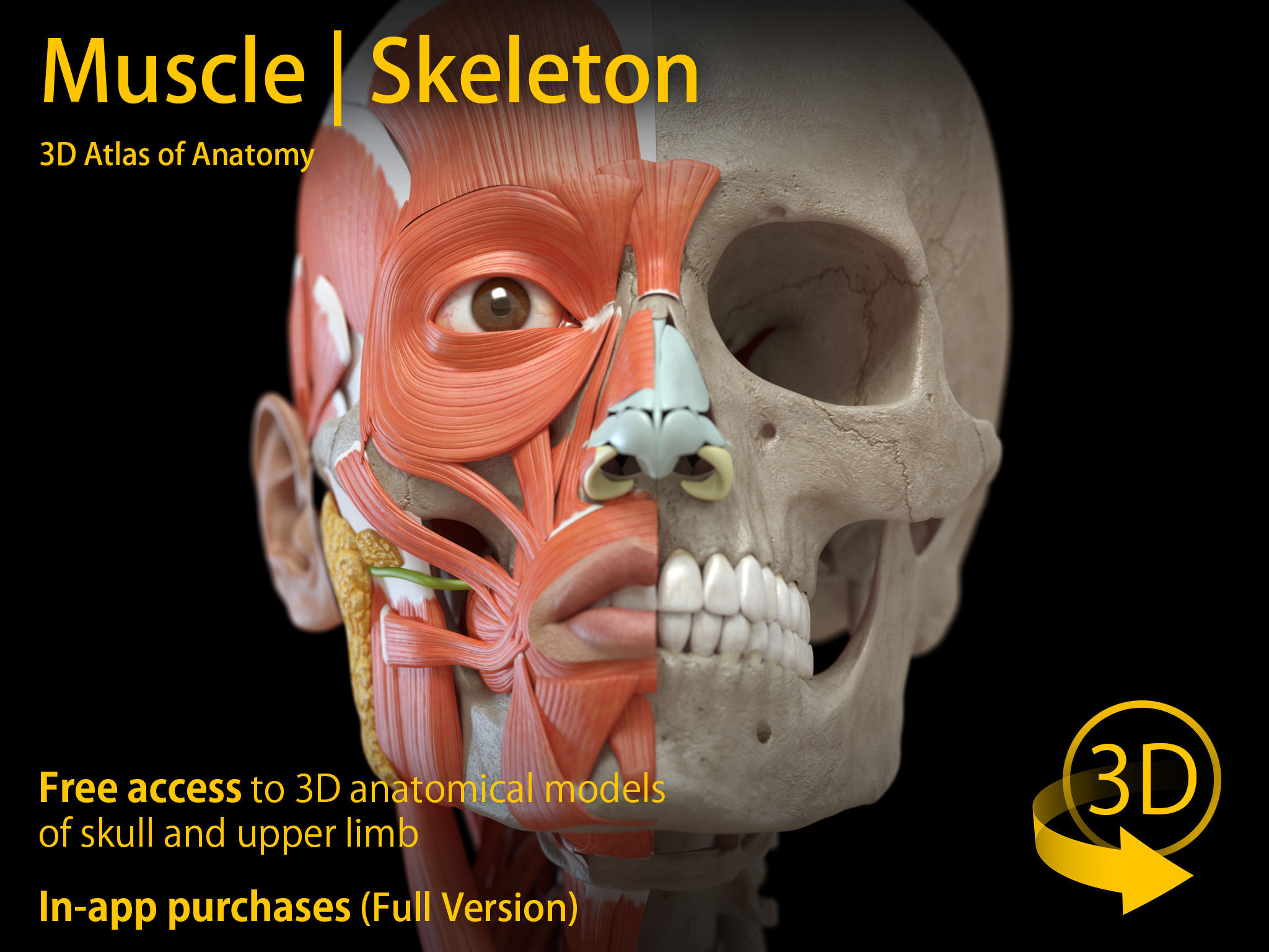 Muscle Skeleton 3d Anatomy App Ranking And Store Data App