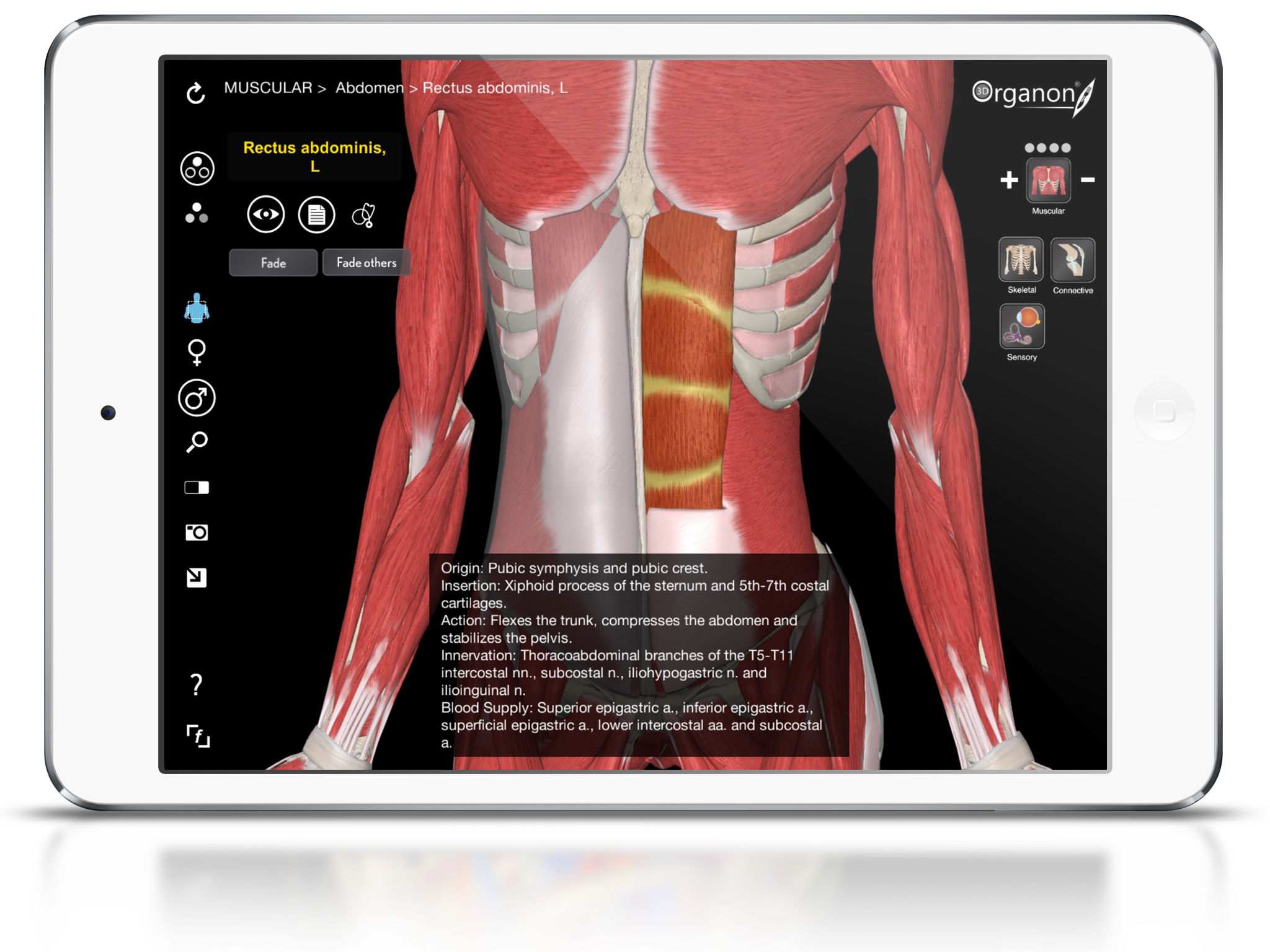 3D Organon Anatomy - Muscles, Skeleton, and Ligaments App Ranking ...