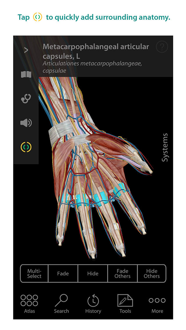 Human Anatomy Atlas 3d Anatomical Model Of The Human Body App