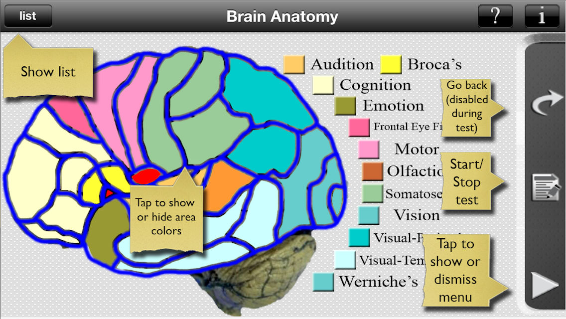 Brain Anatomy App Ranking and Store Data | App Annie