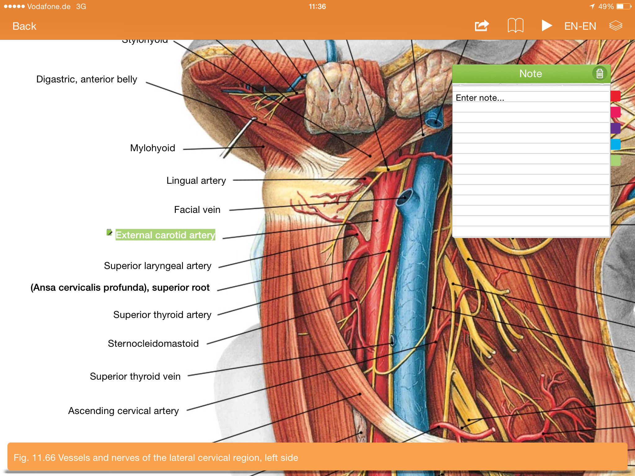 Sobotta Anatomy Atlas Free App Ranking and Store Data | App Annie