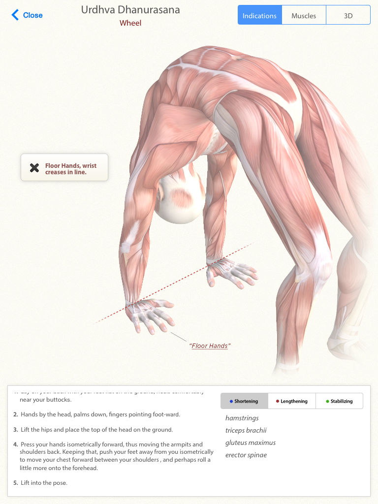 3D Yoga Anatomy Lite App Ranking and Store Data | App Annie