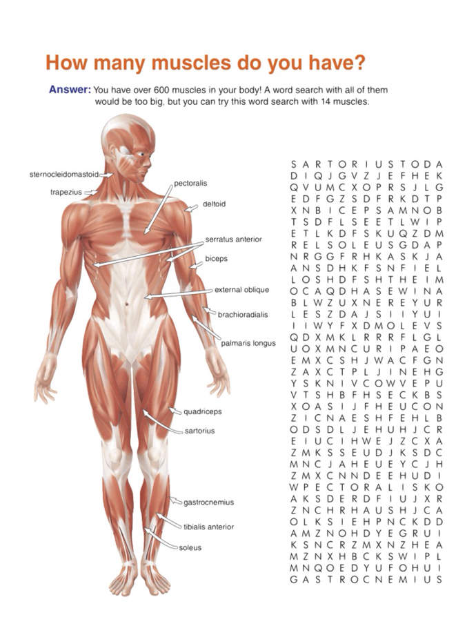 Science:Human Anatomy Worksheets(Grade3-5) App Ranking and Store ...