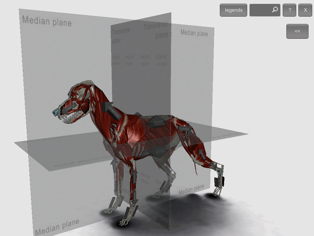 3D Canine Anatomy App Ranking and Store Data | App Annie