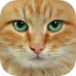 Cat Wallpapers Themes Backgrounds Download Cute Cats Hd Images Free App Ranking And Store Data App Annie