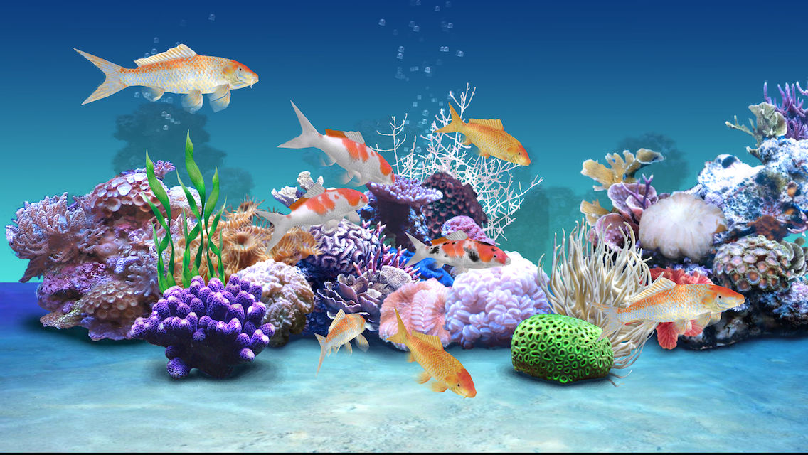 Koi aqua hd real sim coral reef plants and live for Koi fish environment
