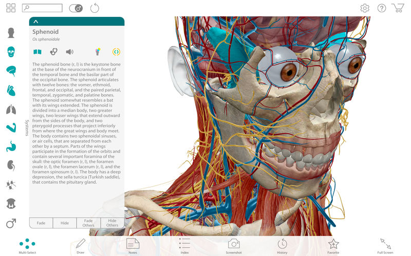 Human Anatomy Atlas 2017 Complete 3d Human Body App Ranking And