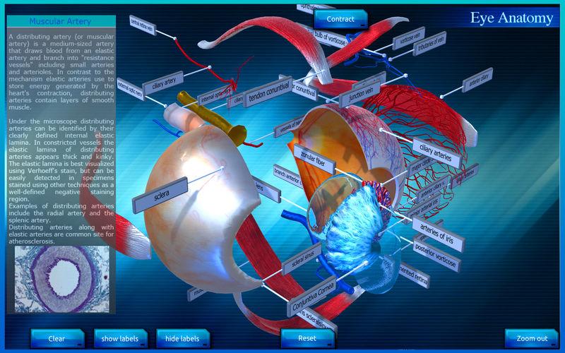Eye Anatomy 3d App Ranking And Store Data App Annie